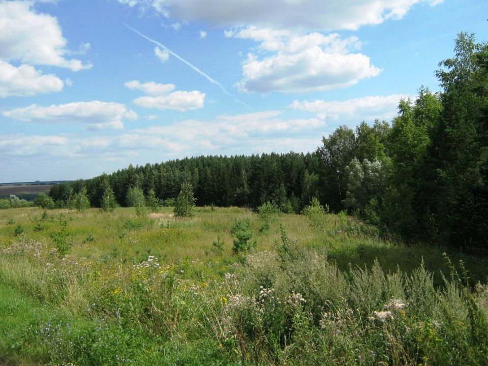 Лес в поселении родовых поместий Просторное