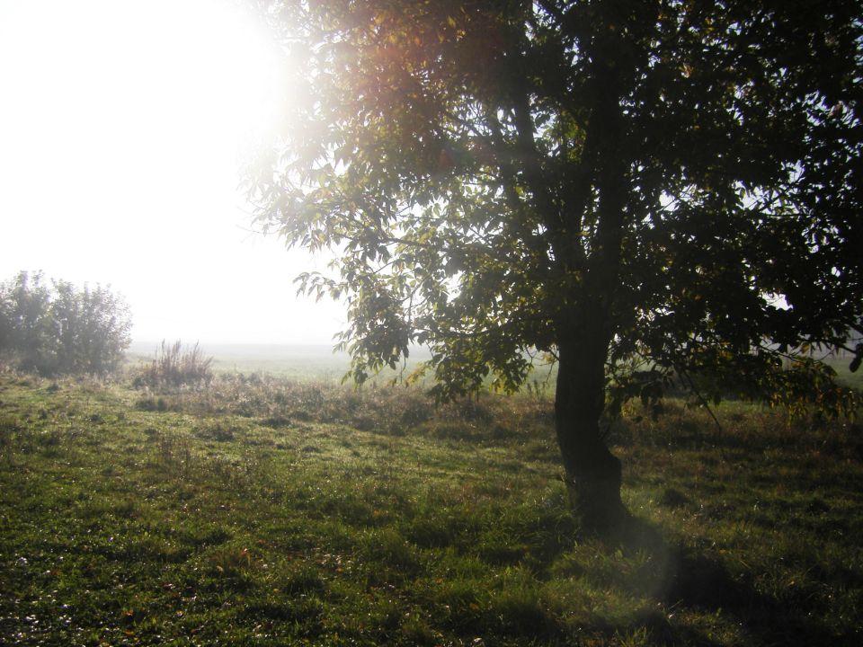 Дерево в поселении родовых поместий Просторное