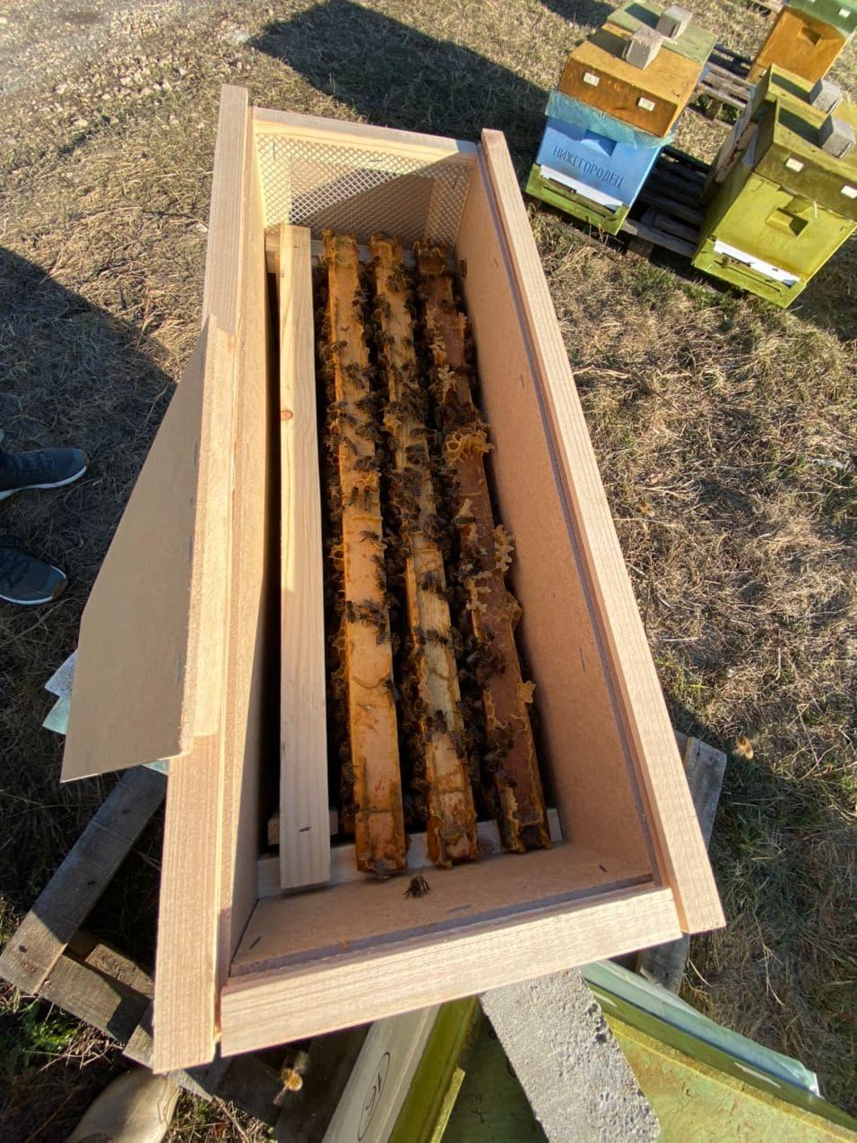 Бакфаст пчелопакет на 3 рамки