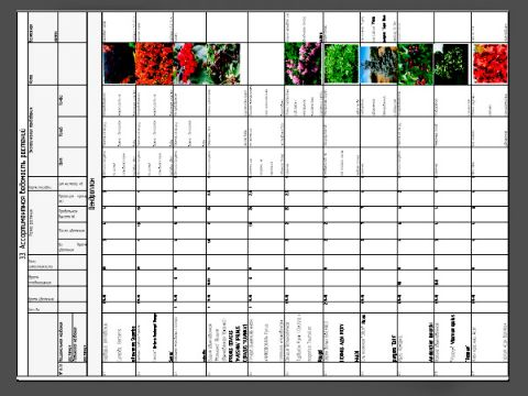 Ассортиментная ведомость растений