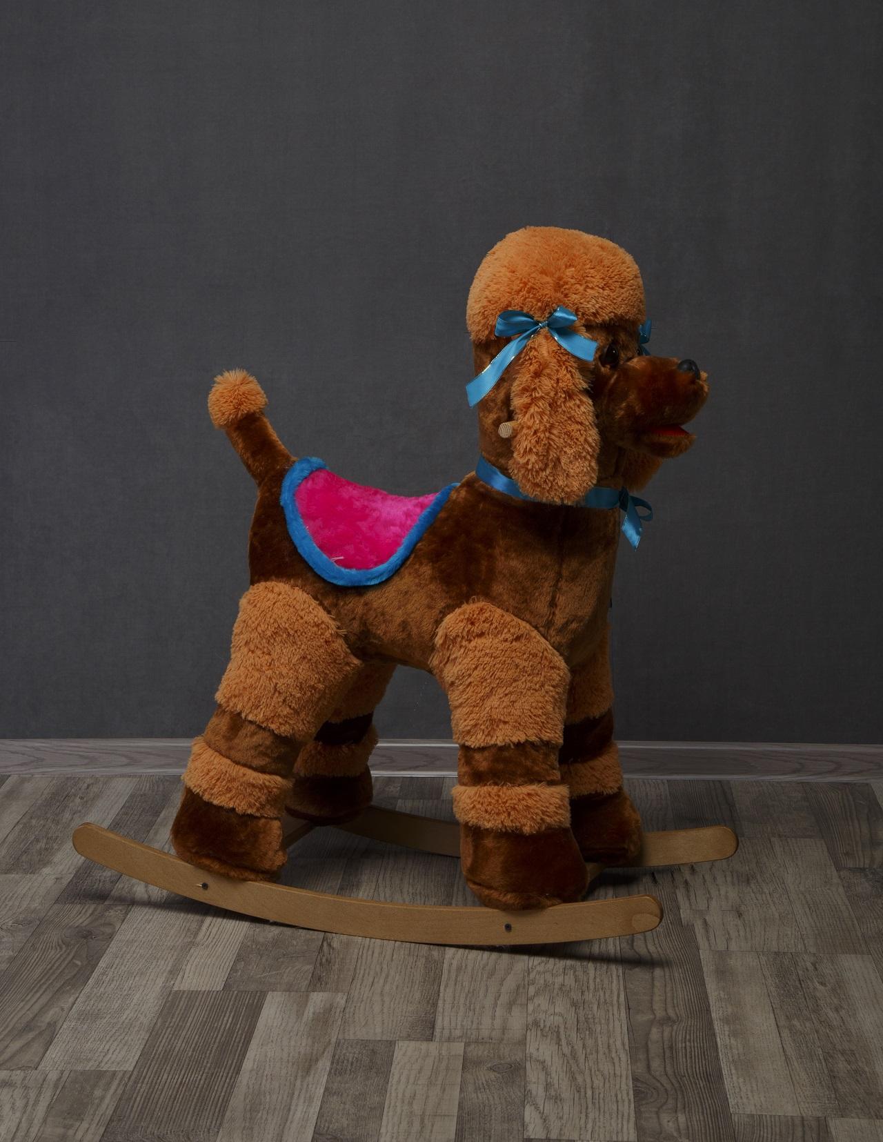 Собака Пудель Арчи