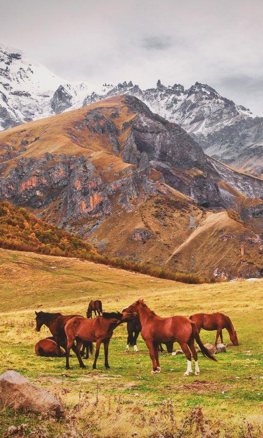 Premium Tours in Kazbegi