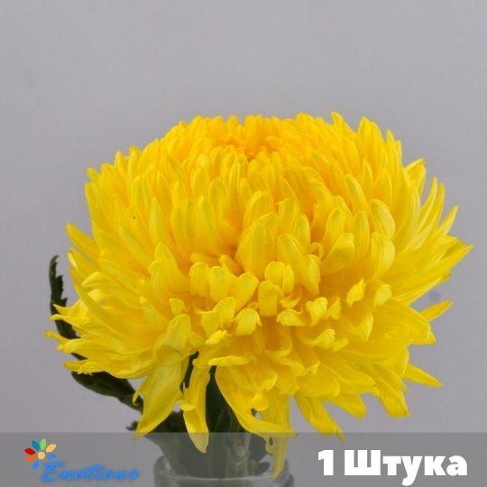 1 Хризантема в ассортименте без упаковки