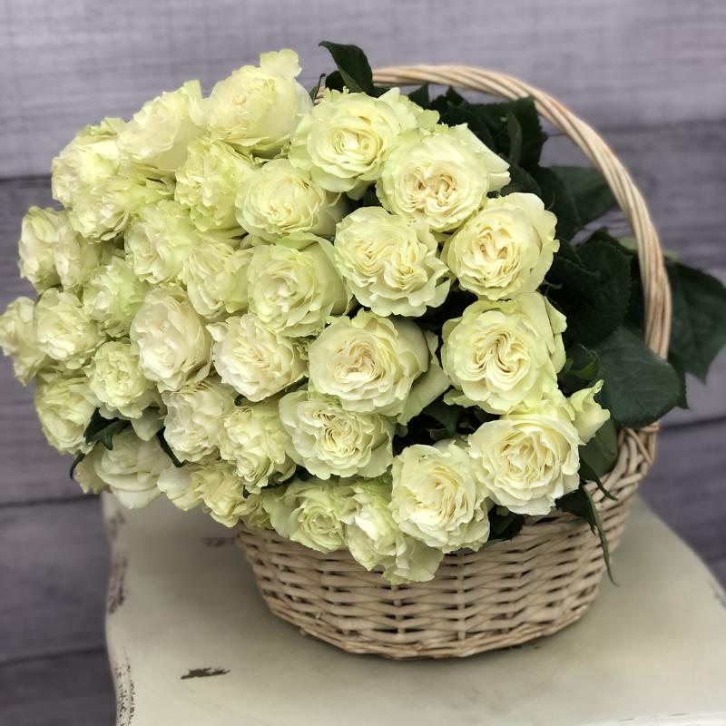 Эквадорская роза 70 см Белая , 51 штука