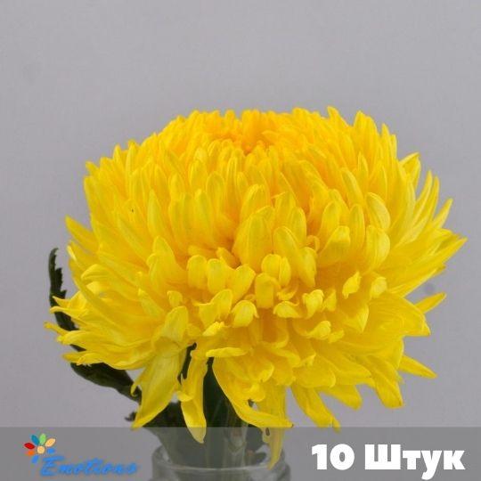 10 хризантем в ассортименте без упаковки