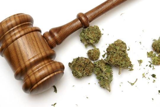 Закон и каннабис