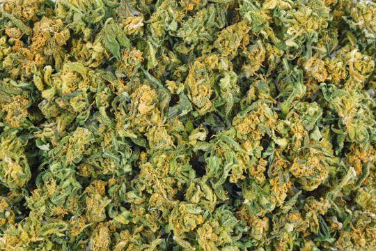 Бутоны марихуаны