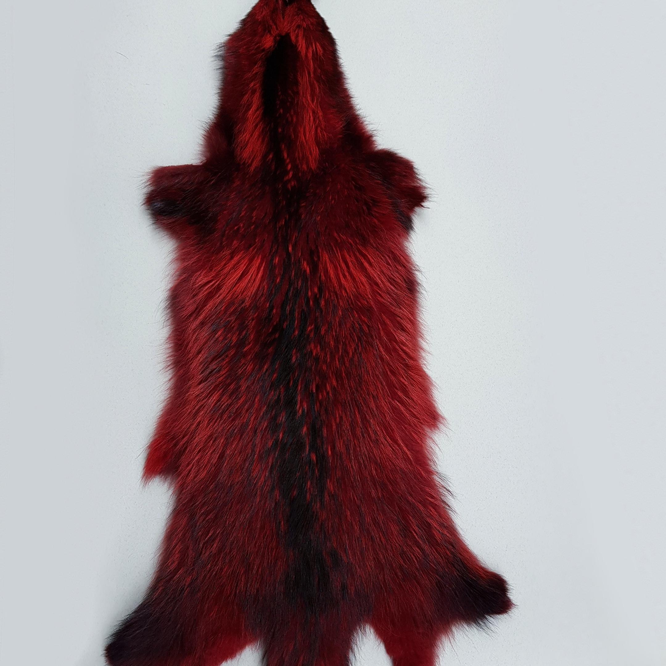 Енотовидная собака красная
