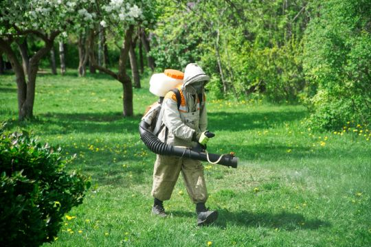 Защита растений от вредителей в Сочи обработка кустарников от тли от клещей