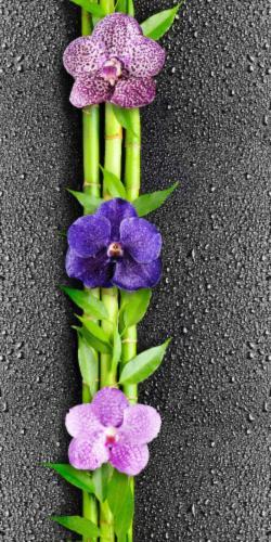 Орхидея черная 351