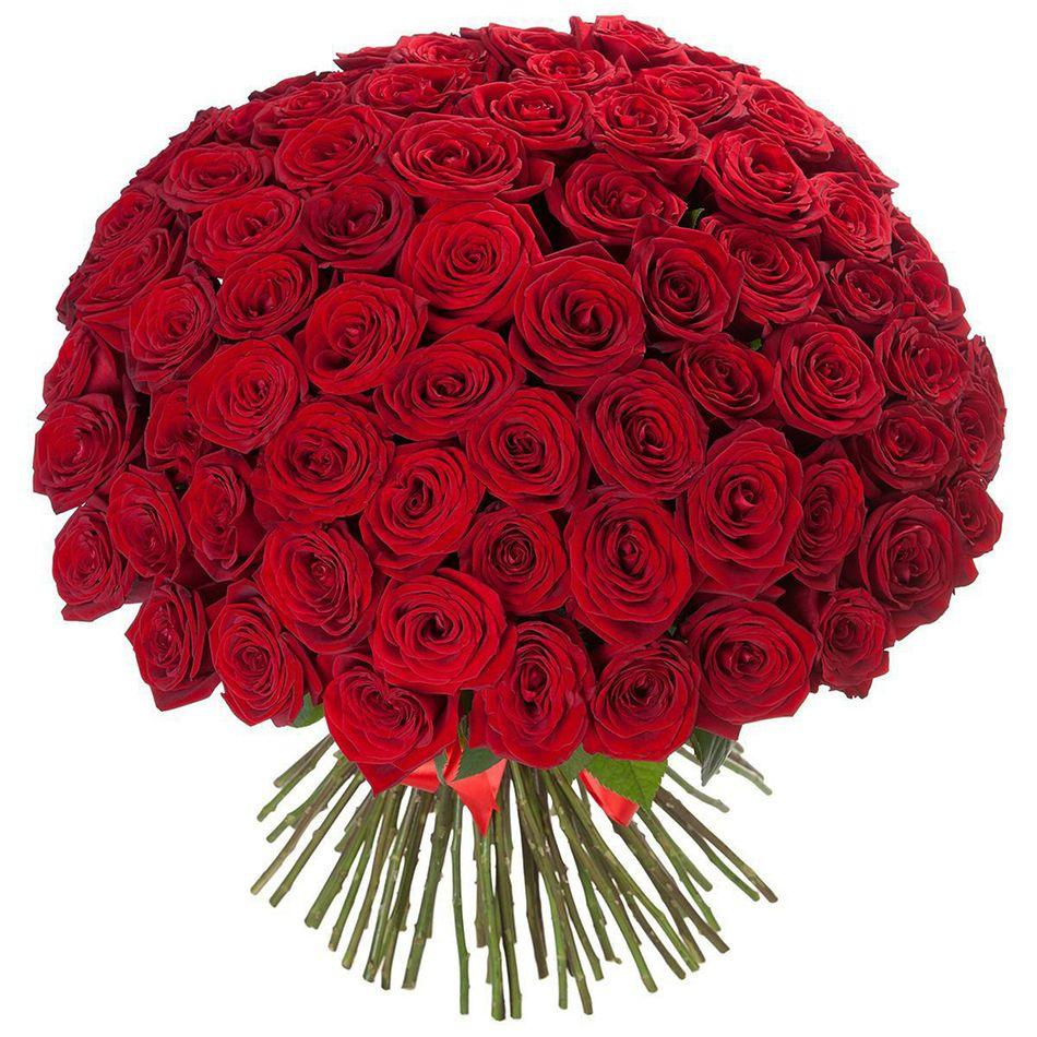 Фотосъемка 101 роза красная