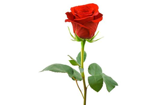 Заказать предметную съемку цветов для интернет магазина в Москве