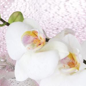 """картинка Фартук """"Орхидеи в каплях"""" от магазина Одежда+"""