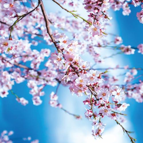 """картинка Потолок """"Весна"""" от магазина Одежда+"""