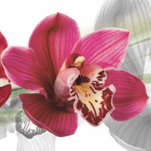 """картинка Фартук """"Орхидеи-2"""" от магазина Одежда+"""