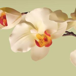 """картинка Фартук """"Нежные орхидеи"""" от магазина Одежда+"""